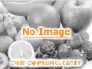 果物NoImageB
