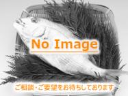魚NoImageB